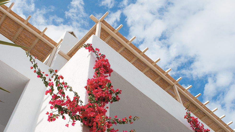 Mykonos Blu Apartment with Sharing Pool Fuchsia bougainvilleas add splashes of intense colour to the Cycladic landscape